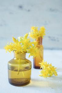 アンティークの茶色いガラス瓶と黄色い多肉植物の花の写真素材 [FYI01800771]