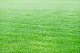 爽やかな芝生の写真素材 [FYI01800825]