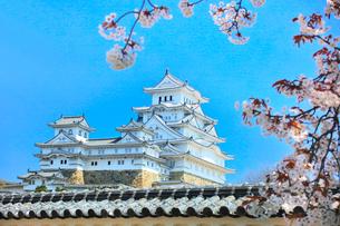 姫路城 天守閣と桜の写真素材 [FYI01800852]