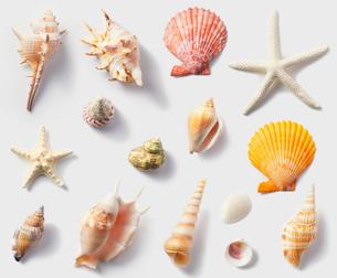 貝がら素材の写真素材 [FYI01800864]