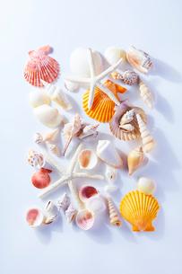 貝がらイメージの写真素材 [FYI01800881]