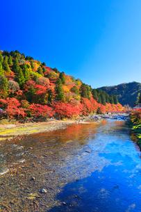 香嵐渓 紅葉と巴川に待月橋の写真素材 [FYI01800889]