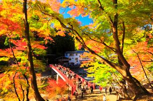 香嵐渓 紅葉と巴川に待月橋の写真素材 [FYI01800903]