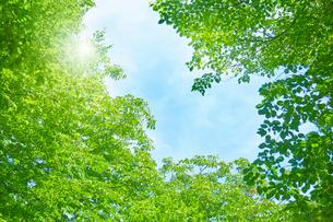 新緑と日差しの写真素材 [FYI01800909]