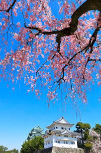 名古屋城 西南隅櫓と天守閣に枝垂桜の写真素材 [FYI01800965]
