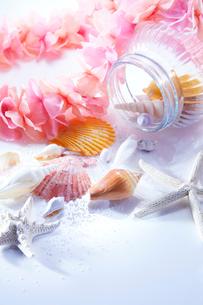 貝がらとレイの写真素材 [FYI01800996]