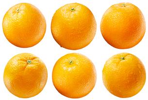 オレンジ素材白バックの写真素材 [FYI01801123]
