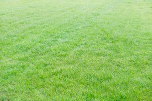 爽やかな芝生の写真素材 [FYI01801186]