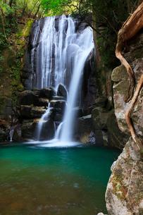 桑の木の滝の写真素材 [FYI01801240]