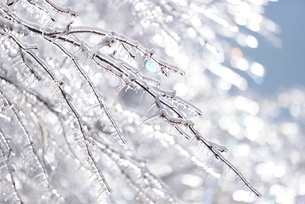 キラキラと輝く雨氷の枝の写真素材 [FYI01802929]