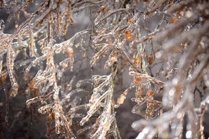光に照らされる雨氷の写真素材 [FYI01802949]