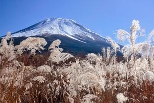 富士山腹より望むススキと富士山の写真素材 [FYI01802993]
