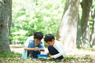 虫取りをする子供の写真素材 [FYI01802998]
