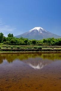 富士吉田市の水が張られた水田より望む富士山の写真素材 [FYI01803046]