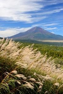 ススキと秋の富士山の写真素材 [FYI01803092]