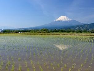 富士市の水田に映る富士山の写真素材 [FYI01803110]
