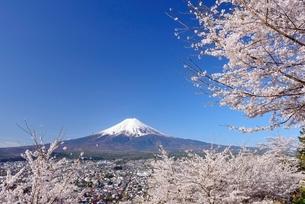新倉山浅間公園の桜と富士山の写真素材 [FYI01803141]