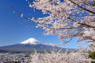 新倉山浅間公園の桜と富士山の写真素材 [FYI01803157]