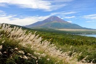 ススキと秋の富士山の写真素材 [FYI01803394]