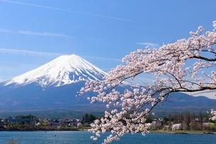 河口湖湖畔の桜と富士山の写真素材 [FYI01803411]