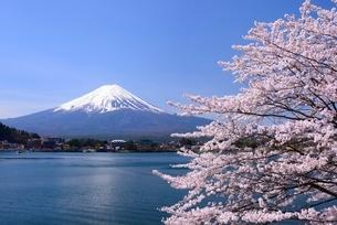 河口湖湖畔の桜と富士山の写真素材 [FYI01803445]