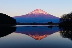 田貫湖より望む富士山(紅富士)の写真素材 [FYI01803468]