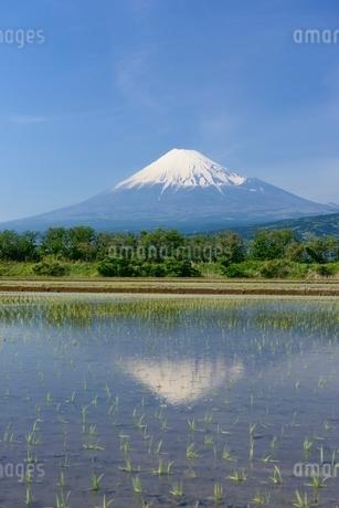 富士市の水田に映る富士山の写真素材 [FYI01803475]
