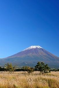 静岡県 秋の富士山とススキと青空 朝霧高原よりの写真素材 [FYI01803509]