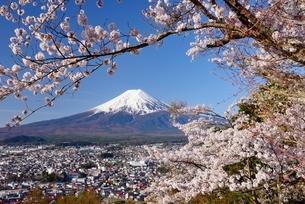新倉山浅間公園の桜と富士山の写真素材 [FYI01803518]