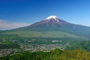 杓子山より望む初夏の富士山の写真素材 [FYI01803520]