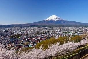 春の新倉山浅間公園より望む富士山の写真素材 [FYI01803556]