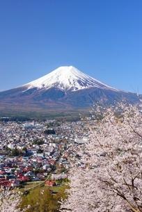 新倉山浅間公園の桜と富士山の写真素材 [FYI01803602]