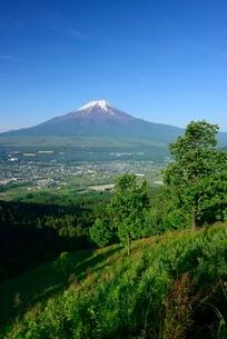 高座山より望む初夏の富士山の写真素材 [FYI01803616]