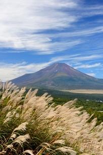 ススキと秋の富士山の写真素材 [FYI01803619]