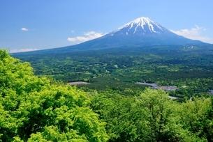 山梨県 新緑と富士山 紅葉台レストハウスよりの写真素材 [FYI01803623]