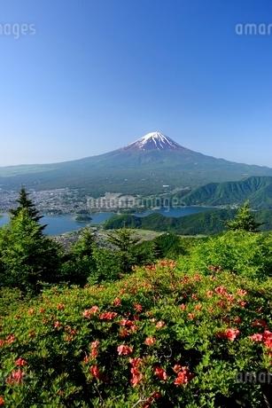 初夏の新道峠より望むツツジと富士山の写真素材 [FYI01803632]