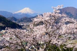 岩殿山の桜と富士山の写真素材 [FYI01803639]