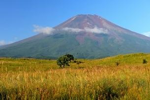 梨ヶ原より望む冠雪前の富士山の写真素材 [FYI01803650]