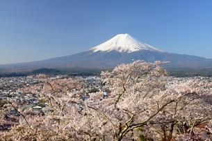 山梨県 新倉山浅間公園の桜と富士山の写真素材 [FYI01803655]