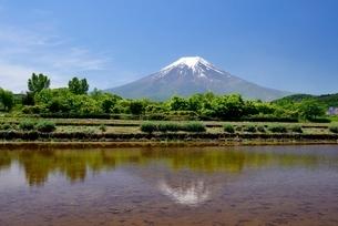 富士吉田市の水が張られた水田より望む富士山の写真素材 [FYI01803660]