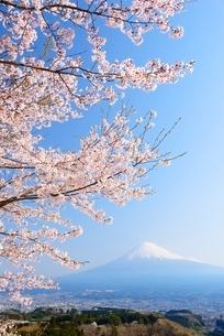 静岡県 桜と富士山 の写真素材 [FYI01803664]