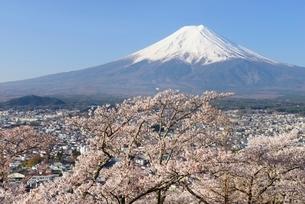 山梨県 新倉山浅間公園の桜と富士山の写真素材 [FYI01803675]