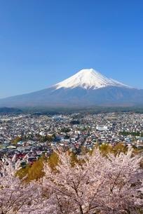 山梨県 桜咲く新倉山浅間公園より望む富士山の写真素材 [FYI01803748]