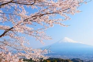 静岡県 桜と富士山 の写真素材 [FYI01803785]