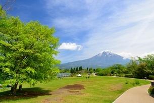 静岡県 田貫湖南側テントサイトから望む富士山の写真素材 [FYI01803802]