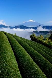 静岡の茶畑と雲海の向こうに見える富士山の写真素材 [FYI01803813]