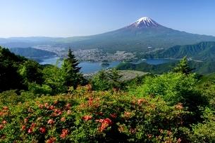 初夏の新道峠より望むツツジと富士山の写真素材 [FYI01803822]