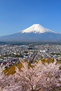山梨県 桜咲く新倉山浅間公園より望む富士山の写真素材 [FYI01803829]