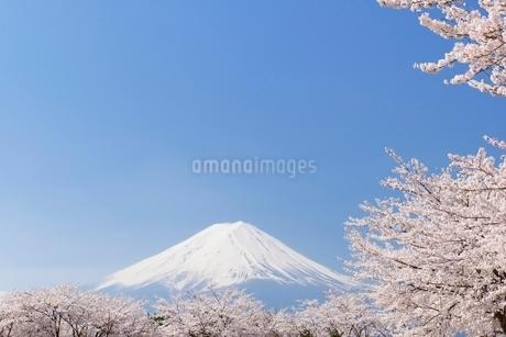 山梨県 河口湖の桜と富士山の写真素材 [FYI01803845]