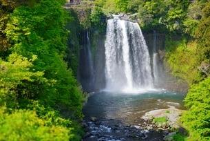 静岡県 新緑の音止の滝の写真素材 [FYI01803853]